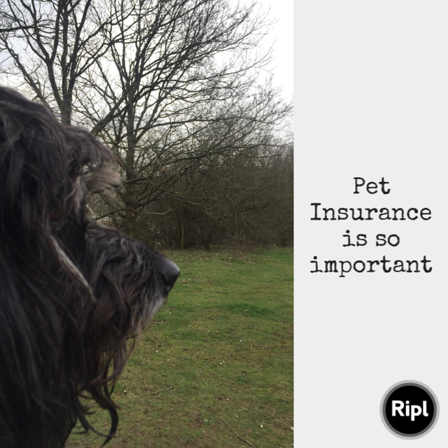 PET INSURANCE MAY SAVE YOUR DOGS LIFE.