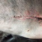 Operation scar.